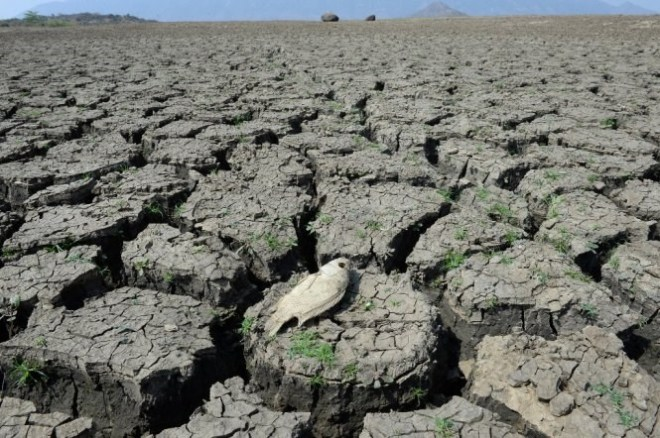 A fish dies in an empty dry reservoir in the central province of Ninh Thuan. Photo credit: Tuoi Tre